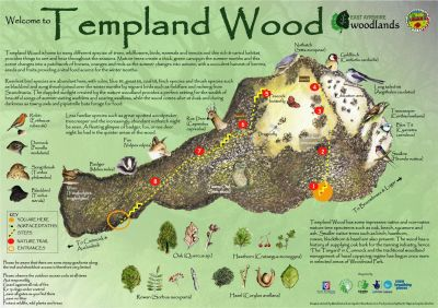 Templand Wood trail